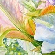Carols-iris-i Poster