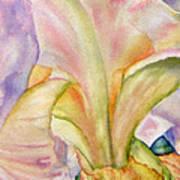 Carols-iris-ii Poster