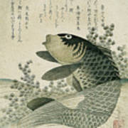 Carp Among Pond Plants Poster