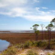Carrabelle Salt Marshes Poster
