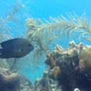 Carribean Sea Life Poster