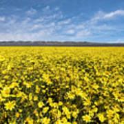 Carrizo Plain Desert Sunflower Field Afternoon Poster