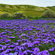 Carrizo Plain National Monument Wildflowers Poster
