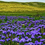 Carrizo Plain Wildflowers Poster