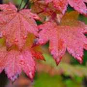 Cascade Autumn Leafs 5 Poster