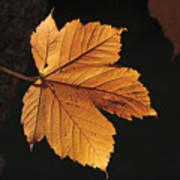 Cascade Orange Poster