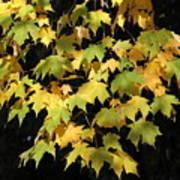 Cascading Leaves Poster