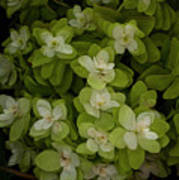 Cascading White Blossoms 3 Poster