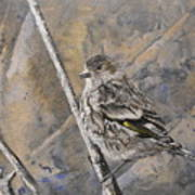 Cassin's Sparrow Poster