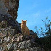 Castle Cat Poster