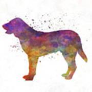Castro Laboreiro Dog In Watercolor Poster