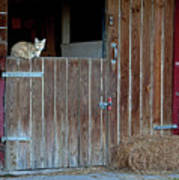Cat And Barn Poster