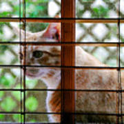 Cat At The Window Poster