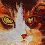 Cat Eye Poster by Shahid Muqaddim