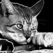 Cat Eyes Poster