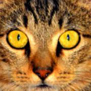 Cat Face Portraiture Poster