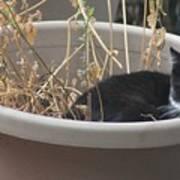 Cat In Flower Pot. Poster