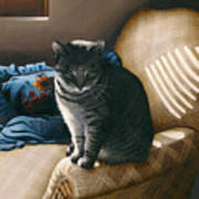 Cat In Shadows Poster by Carol Wilson