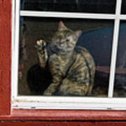 Cat In The Red  Window Poster