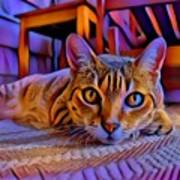 Cat Laying On Braided Rug Poster