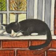 Cat Nap In Window Poster