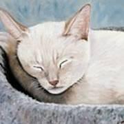 Cat Nap Poster