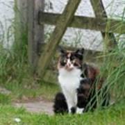 Farm Cat On Duty Poster