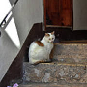 Cat On Steps Poster