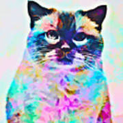 Cat Picture Poster