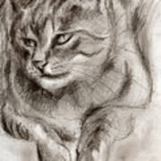 Cat Study Drawing No One Poster
