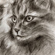 Cat Study Drawing No Two Poster