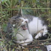 Cat Yawning In The Garden Poster