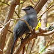 Catbird In Spring Poster