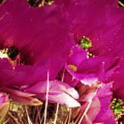 Catcus Flower Poster