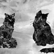 Cats-black Poster