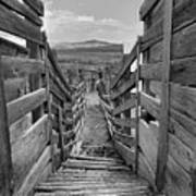 Cattle Chute Poster