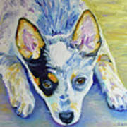 Cattle Dog Puppy Poster