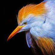 Cattle Egret Electrified Poster