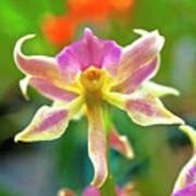 Caucaea Rhodosticta Orchid Poster