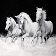 Cavalli Verticali Poster