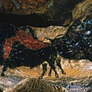Cave Drawing/lascaux Poster