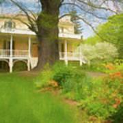 Cedar Grove In Spring Poster
