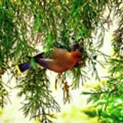 Cedar Waxwing Beauties 19 Poster