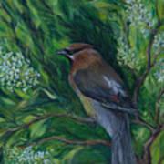 Cedar Waxwing In Lilac Poster