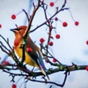 Cedar Waxwing Painting Poster