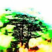 Cedars Of Lebanon  Poster