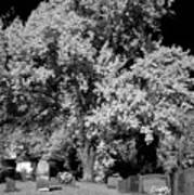 Cemetery Infrared Poster