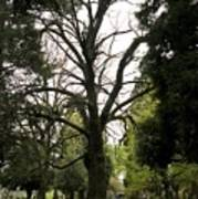 Cemetery Trees 2 Poster