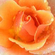 Center Of Orange Rose Poster