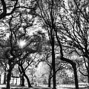 Central Park In Black And White Poster